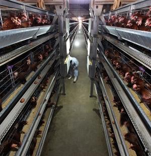 大连鸡蛋厂房展示